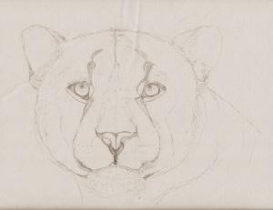 Leopard Outline BW